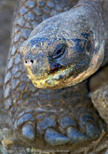 08.2-close-up-schildpad