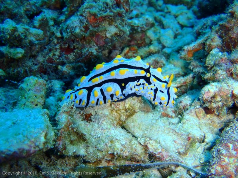 Onderwater-slak