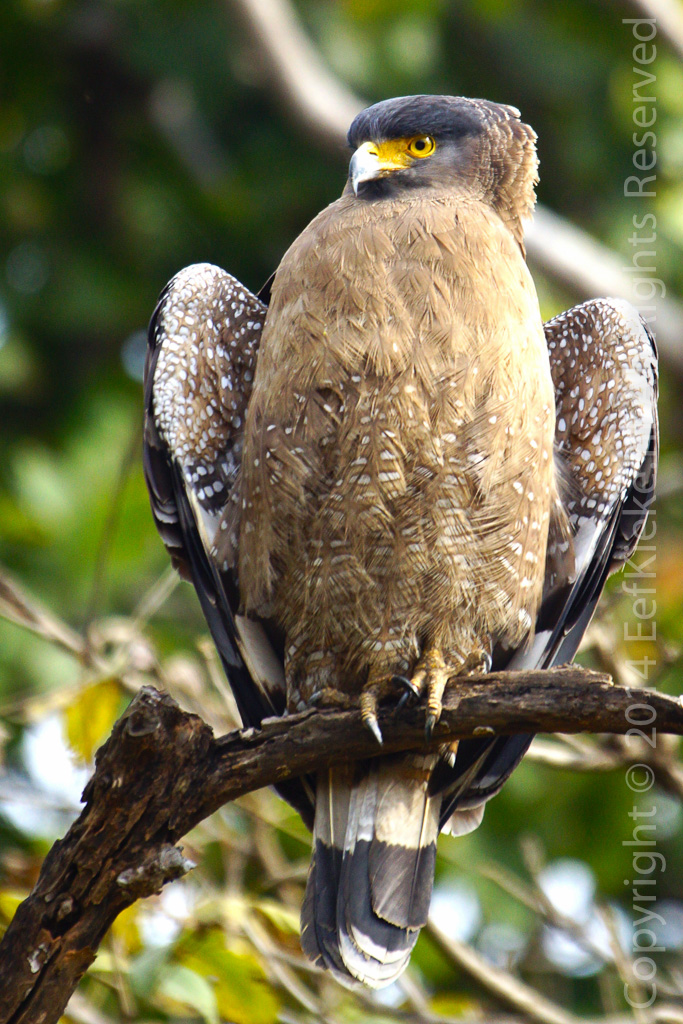 13 Bird of prey