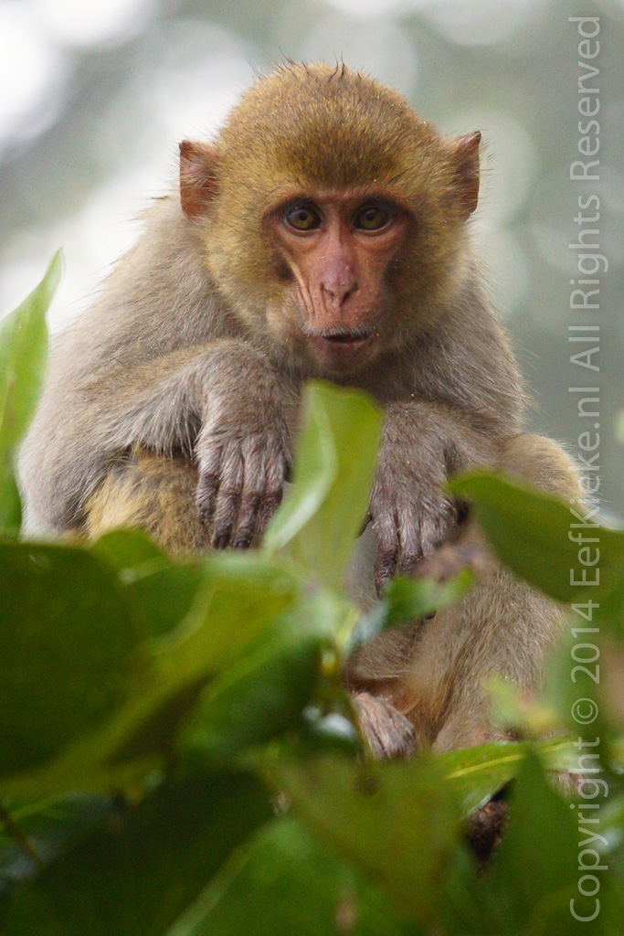 15.1 aapjes kijken