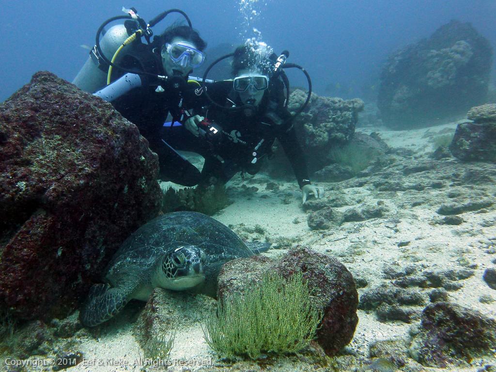 24 wij met de zeeschildpad