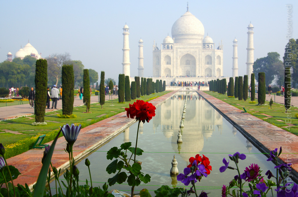 26.8 Taj with flowers