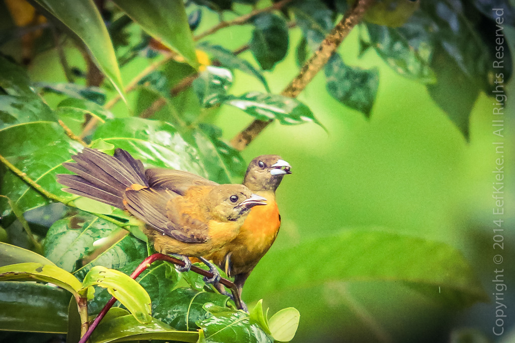 5.1 Birds