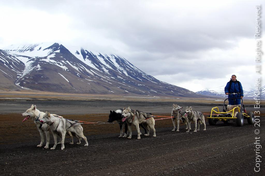 6 Hondenslee op wieltjes