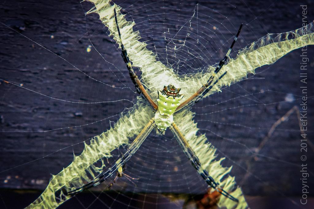 7.3.1 Insectenlandingsbaan