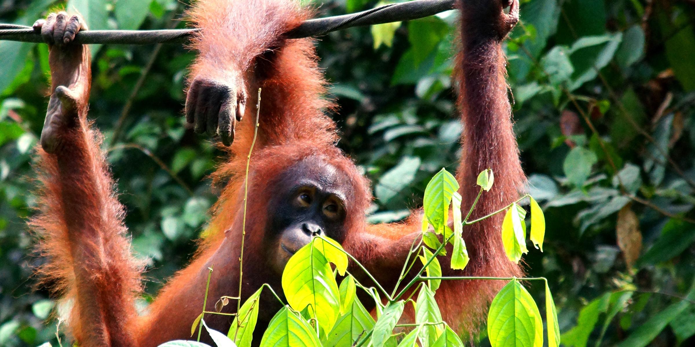 Borneo 4 2400x1200