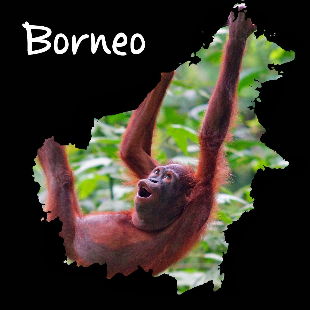 Borneo Landen