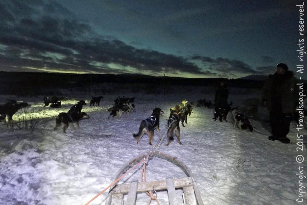 Dogsledding.2