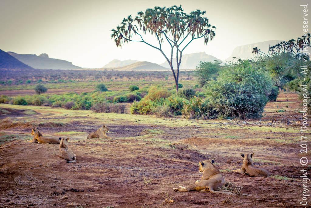 travel-soap-kenia-samburu-2017-14