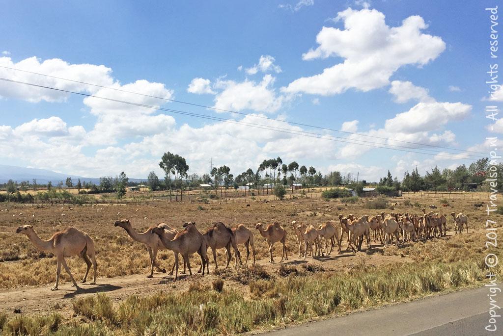 travel-soap-kenia-samburu-2017-22