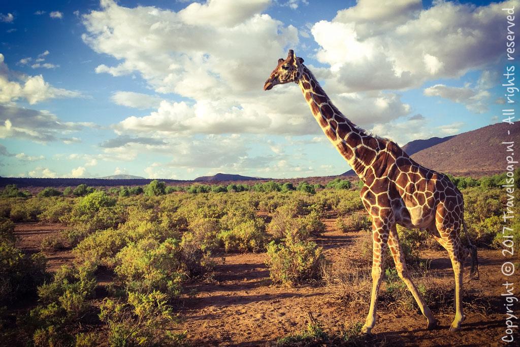 travel-soap-kenia-samburu-2017-3