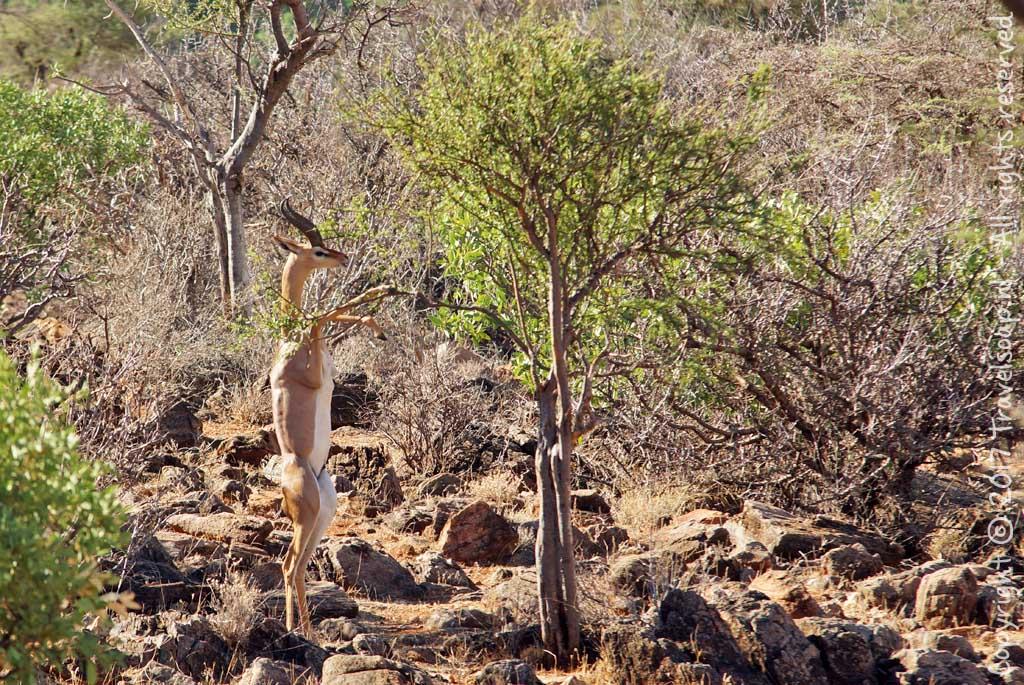travel-soap-kenia-samburu-2017-36
