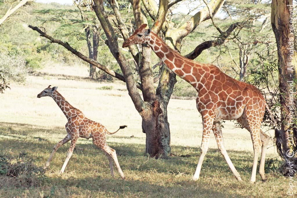 travel-soap-kenia-solio-2017-2-2