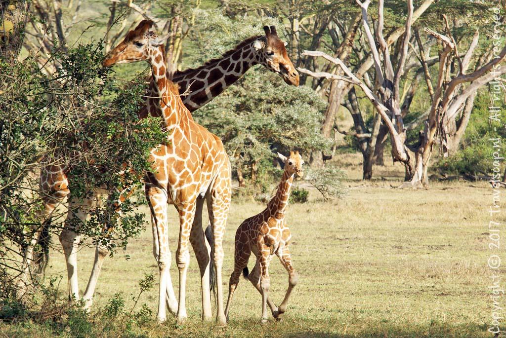 travel-soap-kenia-solio-2017-2-4