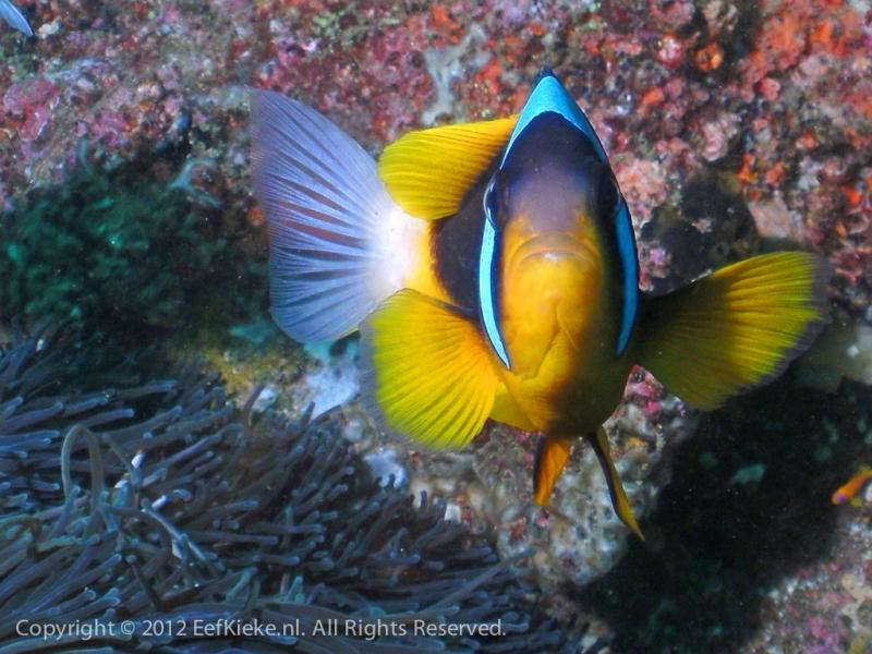 22-Toch-weer-een-clownvisje