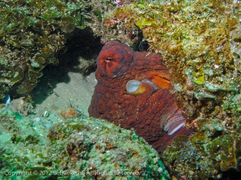 29-Octopussy