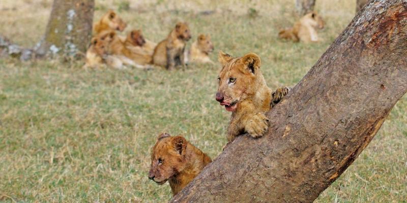 Kenia-verhaal-9-2400x1200px-