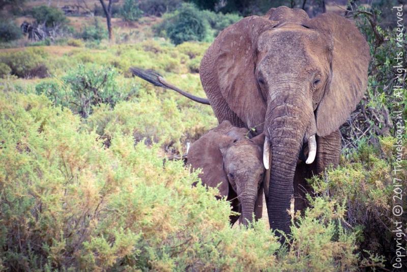 travel-soap-kenia-samburu-2017-12