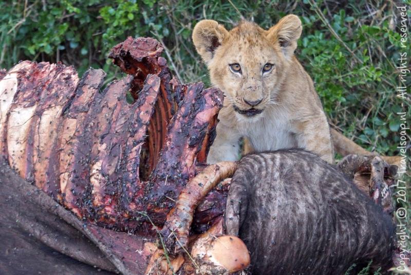 travel-soap-kenia-solio-2017-17