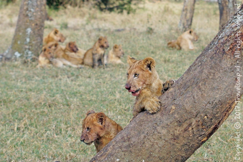 travel-soap-kenia-solio-2017.3-9