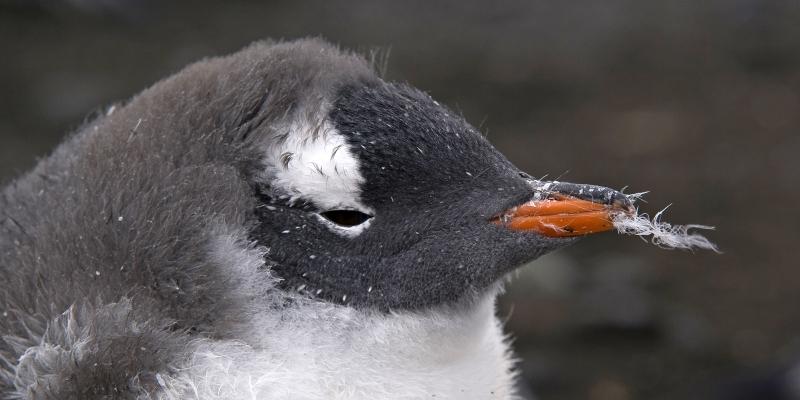 Antarctica-2-2400x1200