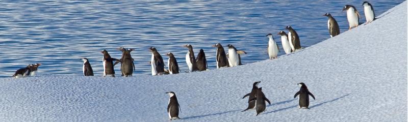 Antarctica-2-2400x720