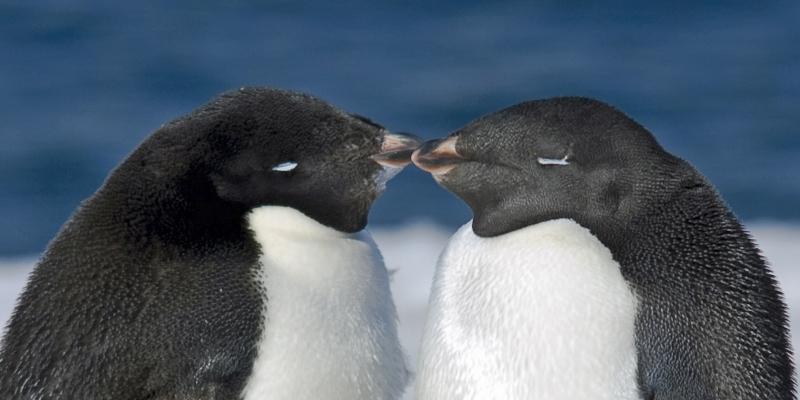 Antarctica-6-2400x1200