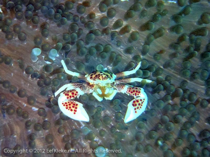 Crabstick
