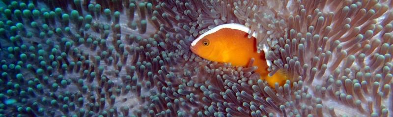 Nemo-2400x720