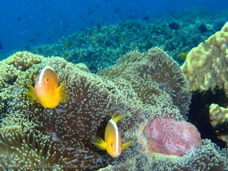 Nemo-II