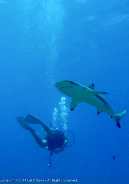 Eef-met-haai-2