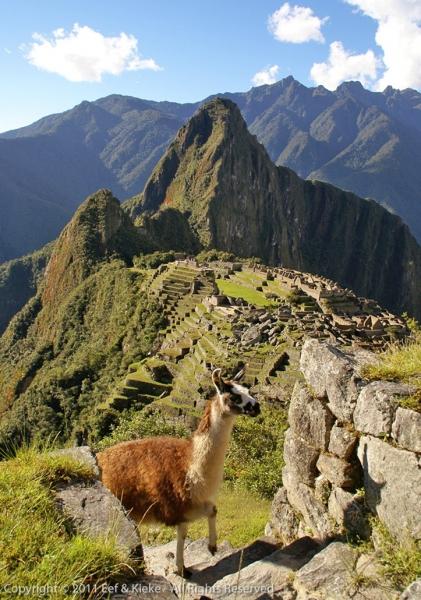Lama-en-Machu-Picchu-2