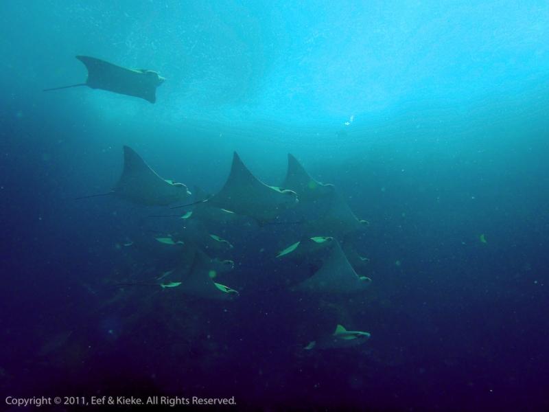 duiken-03-golden-rays