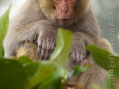 15.1-aapjes-kijken