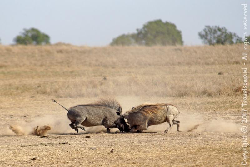 travel-soap-kenia-ol-pejeta-conservancy-2017-7