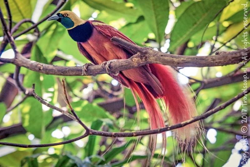 travel-soap-papoea-nieuw-guinea-orotaba-port-morseby-26