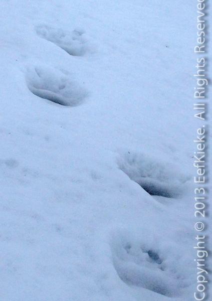 13-Snowtracks1