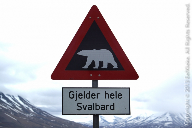 3-IJsberen-bord