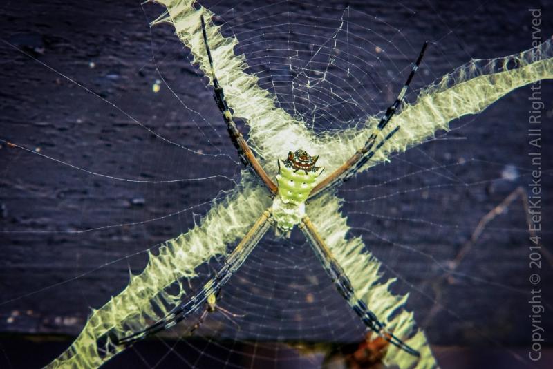 7.3.1-Insectenlandingsbaan