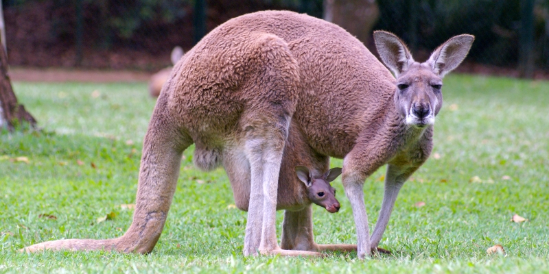 Australie-verhaal-6-2400x1200px1