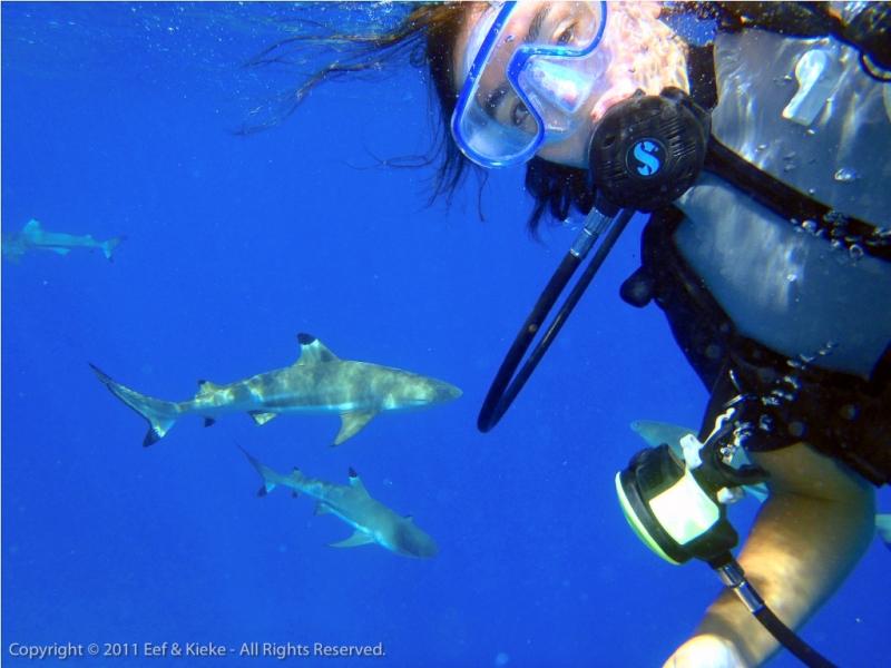 Eef-dresseert-haaien