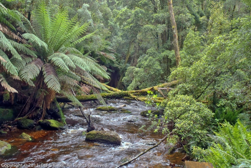Regenwoud-Nelson-Falls-2