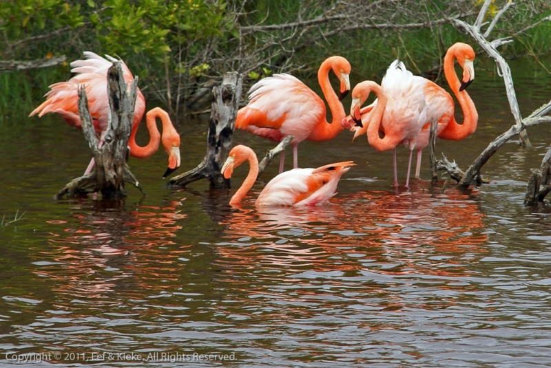 17-flamingos