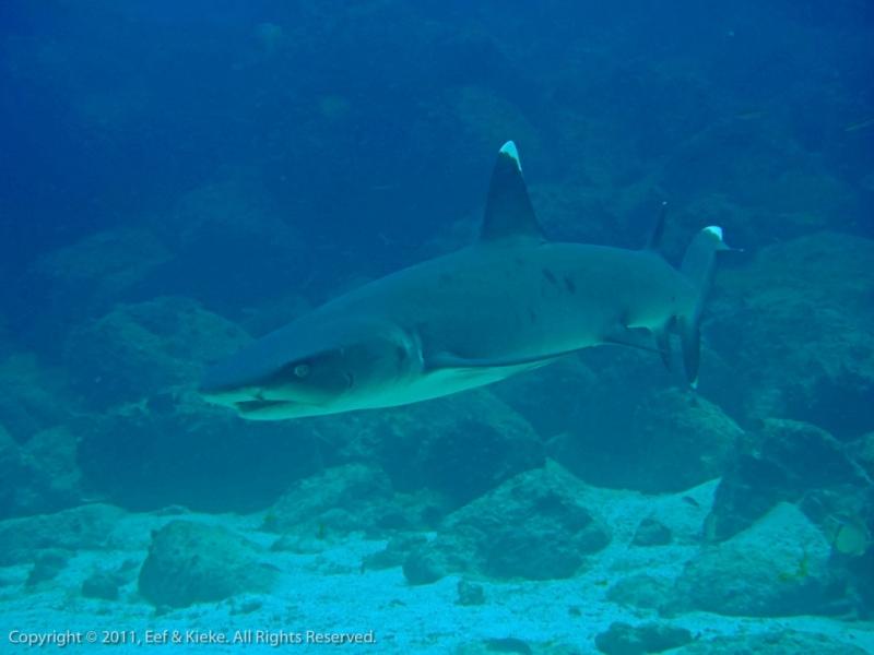 27-nieuwsgierige-haai