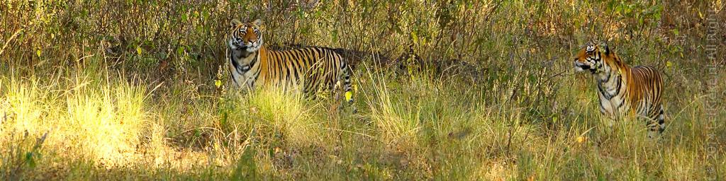 09.4 Tigers