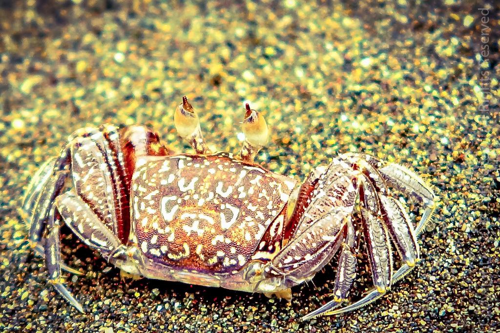 10.1 Crabstick