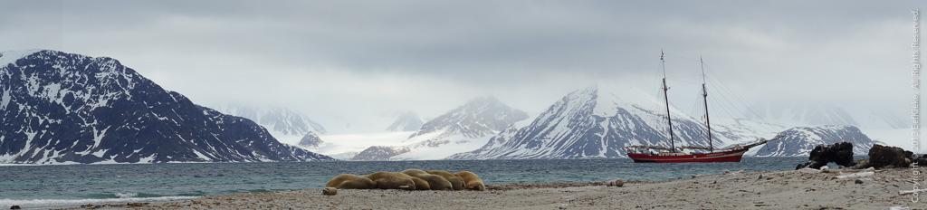14.2 Panorama walrussen
