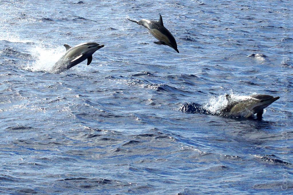 25 Gewone dolfijnen gaan los