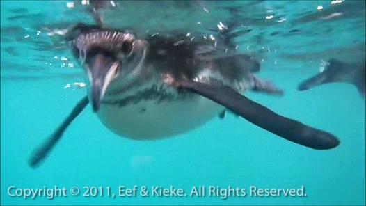 30 pinguin