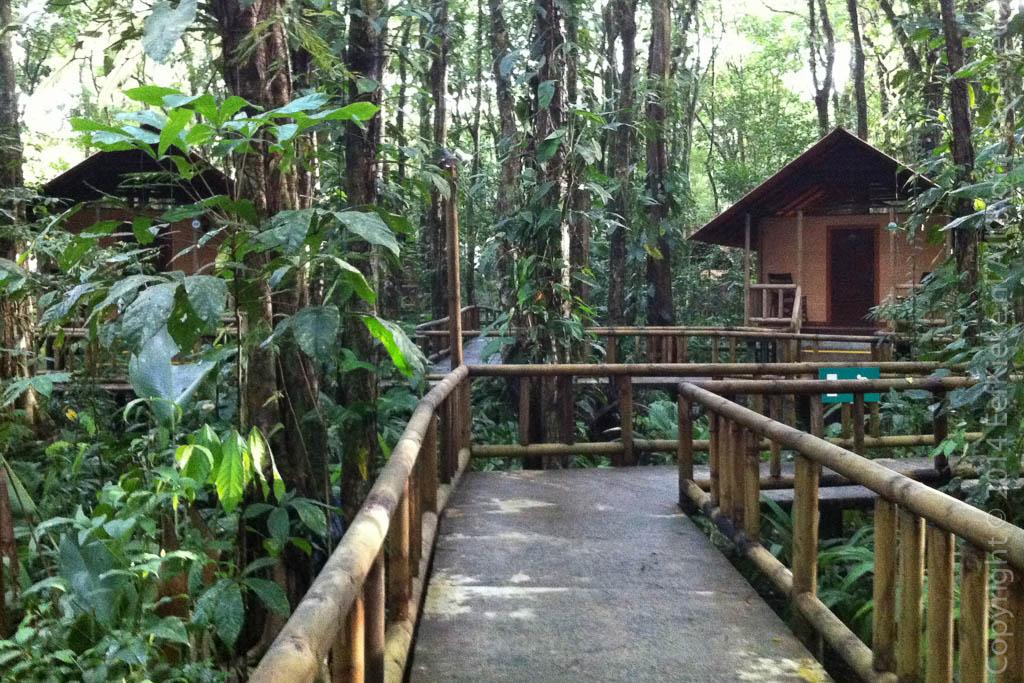 4.1 Rana Roja Lodge
